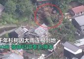 受连日大雨影响日本千年神树因大雨连根倒地